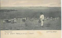 Postcard of Bee Hives (Bienenstocke) in the land of Israel